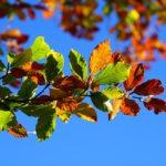 herfst bladeren blauw