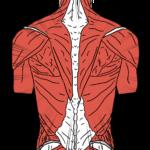 chiropractor hernia