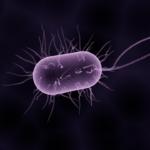 vijftigenmeer e coli